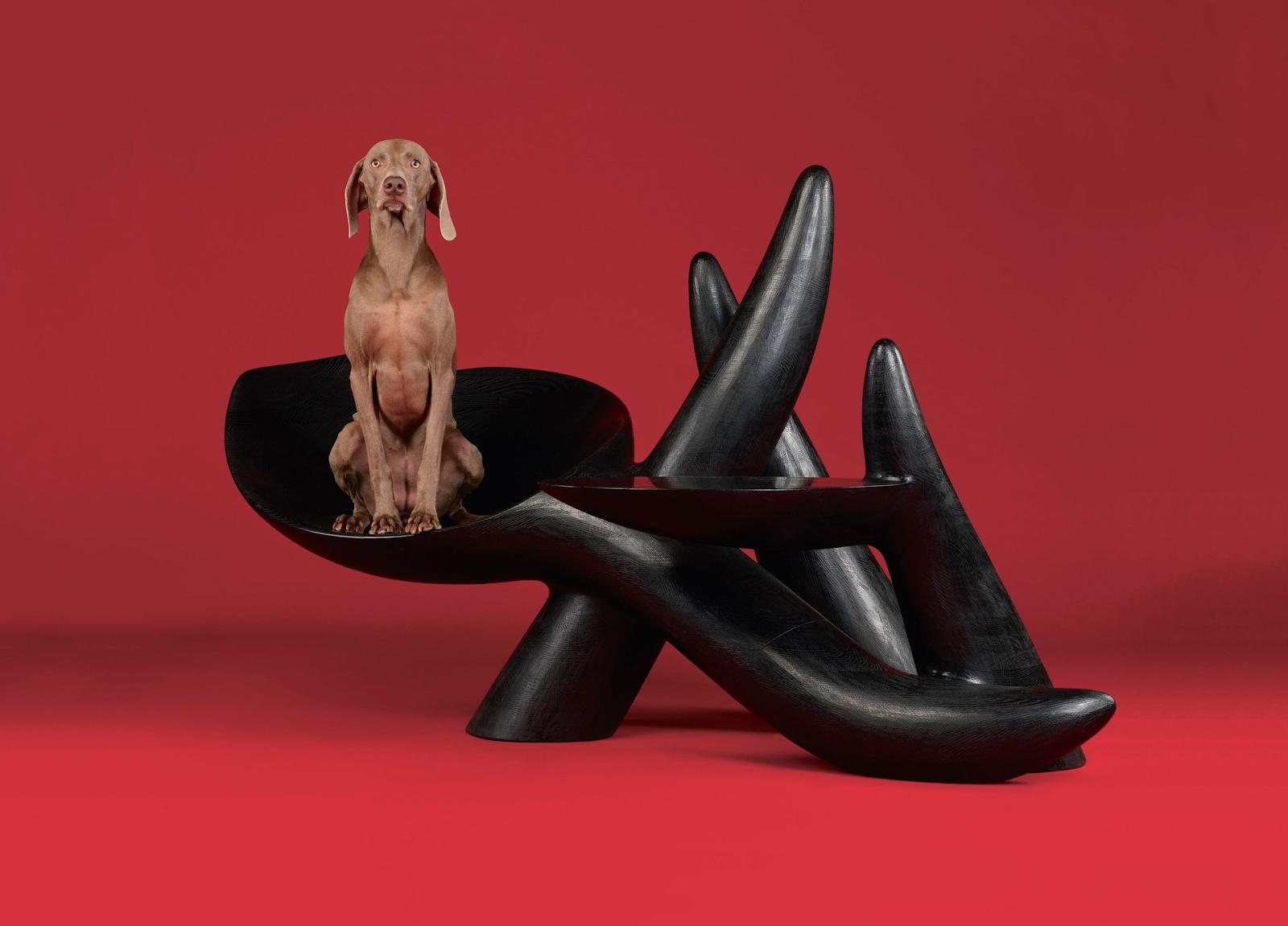 Четвероногие модели: топ-5 животных, которые стали fashion-звездами