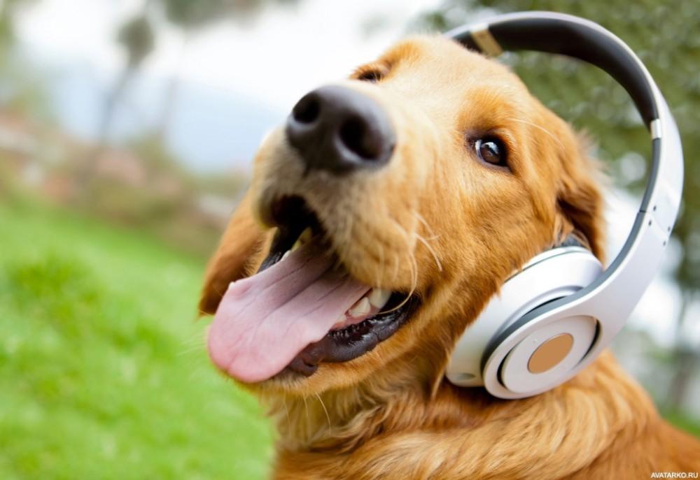 Любимая песня вашего питомца: как музыка влияет на животных