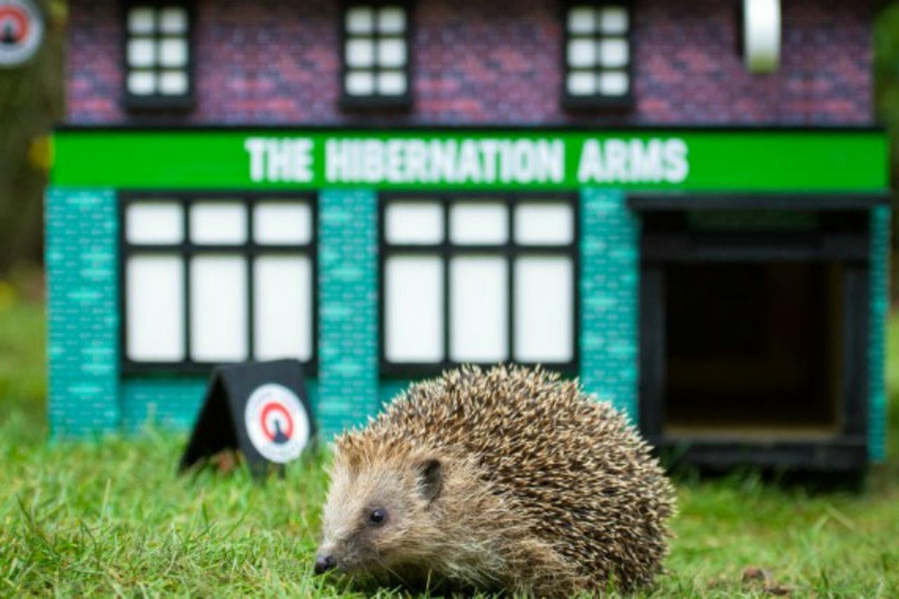 Спасайте ежей – покупайте пиво!: необычная помощь животным в Британии
