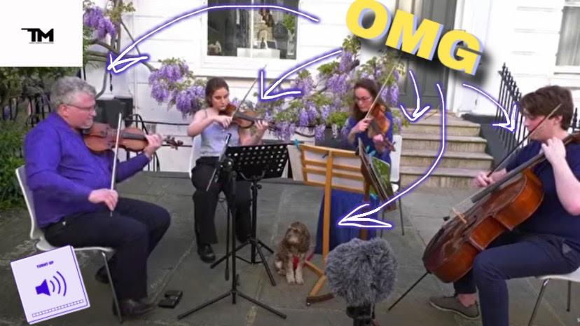 Полицейские прервали концерт музыкантов, игравших для соседей