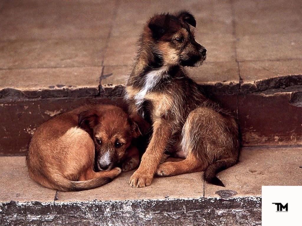 Хочу помочь бездомным животным: с чего начать?