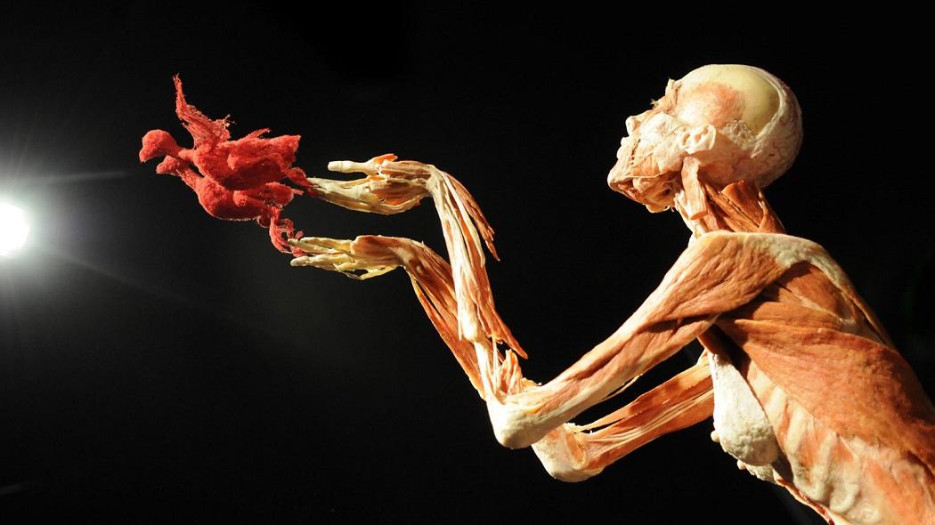 «Body Worlds. Миры тела» или самая обсуждаемая выставка этого года