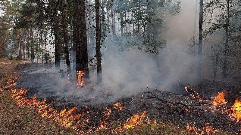 Количество лесных пожаров на Юге России в 2020 выросло на треть